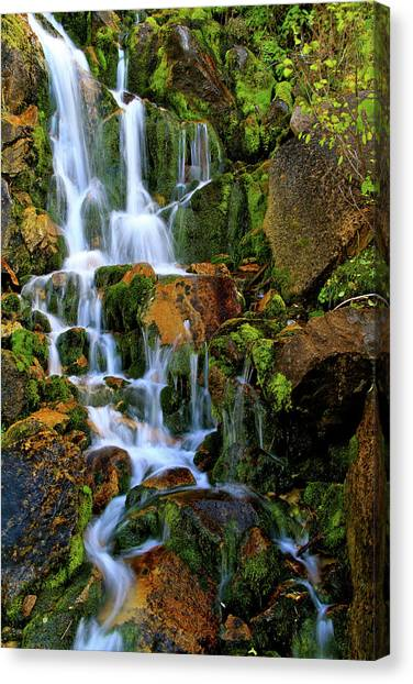 Autumn Along Summit Creek Canvas Print
