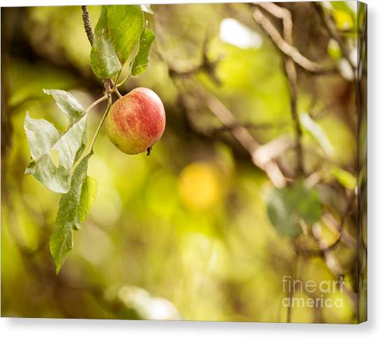 Autumn Apple Canvas Print