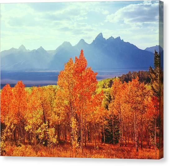Autumn Aspen Trees In Grand Teton Canvas Print by Ron thomas