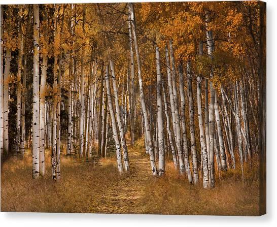 Autumn Aspens Canvas Print