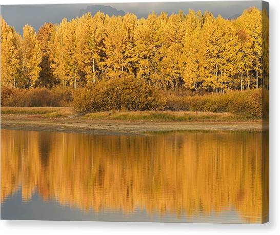 Great Falls Of Yellowstone Canvas Print - Autumn Aspens Reflected In Snake River by David Ponton