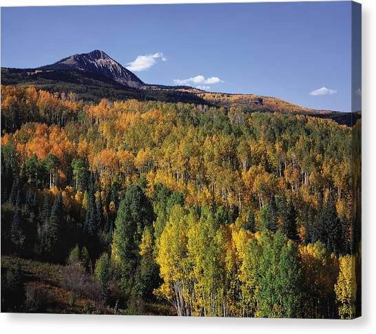 Autumn At Big Baldy Canvas Print