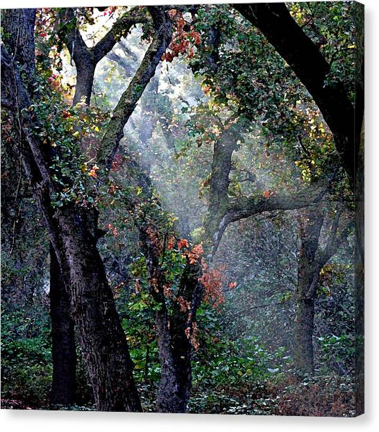 Autumn At First Light Canvas Print