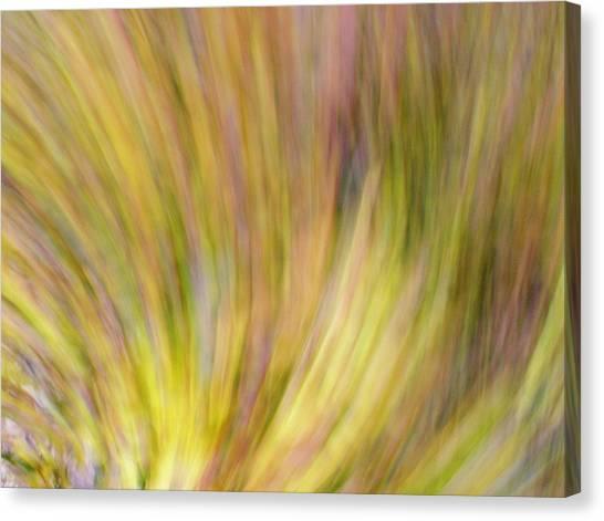 Canvas Print featuring the photograph Autumn Azaleas 4 by Bernhart Hochleitner
