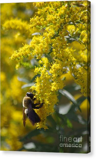Autumn Bee Canvas Print by Tannis  Baldwin