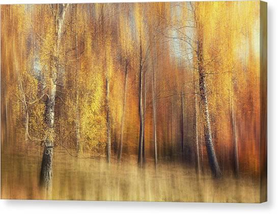 Tree Trunks Canvas Print - Autumn Birches by Gustav Davidsson