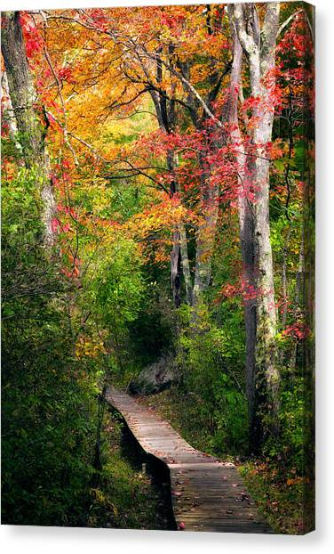 Autumn Scene Canvas Print - Autumn Boardwalk by Bill Wakeley