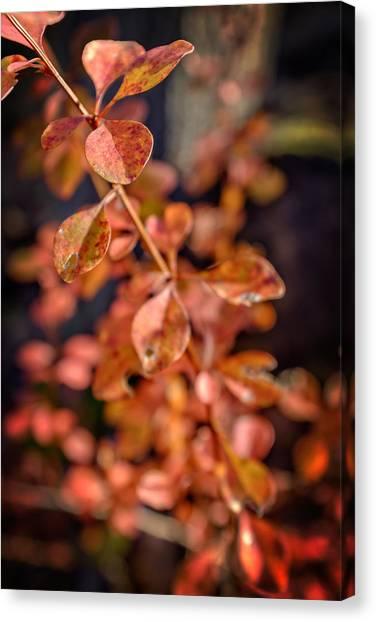 Sweet Briar Canvas Print - Autumn Bramble by Chris Bordeleau