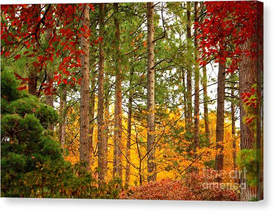 Autumn Canvas Canvas Print