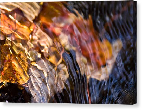 Autumn Color Beneath The Surface Canvas Print