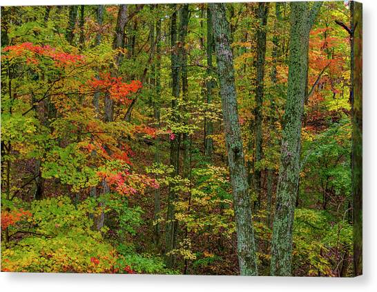 Indiana Autumn Canvas Print - Autumn Color In Brown County State by Chuck Haney