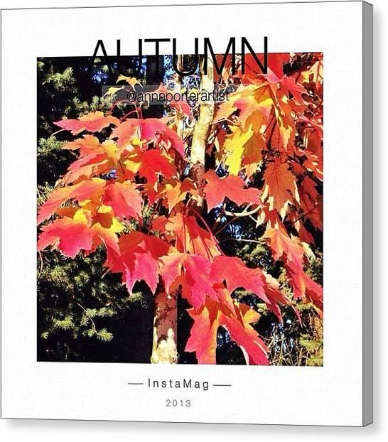 Autumn Leaves Canvas Print - Autumn Colors by Anna Porter