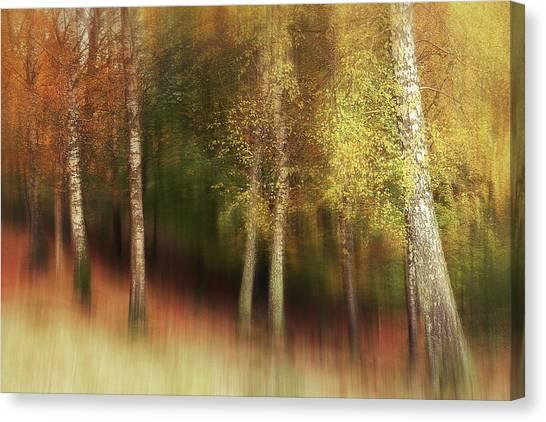 Birch Canvas Print - Autumn Colors by Gustav Davidsson