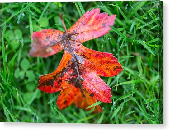 Autumn Colours. Canvas Print