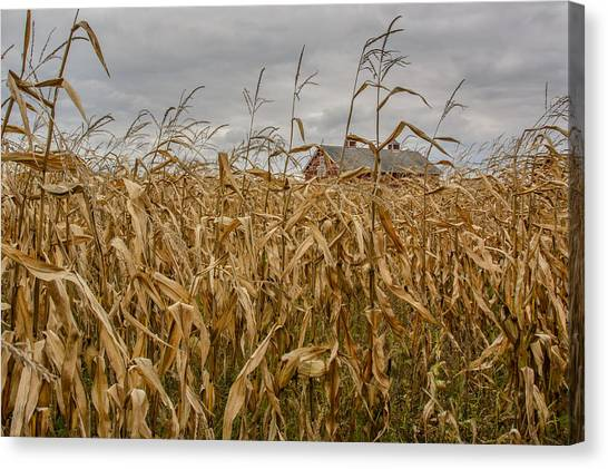Corn Maze Canvas Print - Autumn Corn Field And Barn by At Lands End Photography
