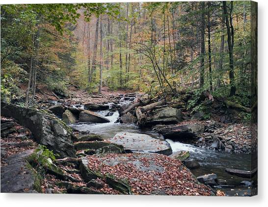 Autumn Drizzle On Kitchen Creek Canvas Print