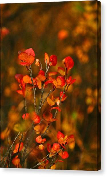Autumn Emblem Canvas Print