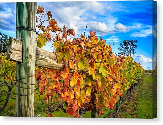 Autumn Falls At The Winery Canvas Print
