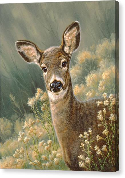 Deer Canvas Print - Autumn Fawn-blacktail by Paul Krapf