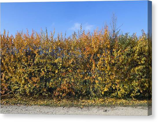 Autumn Fence Canvas Print by Aleksandr Volkov