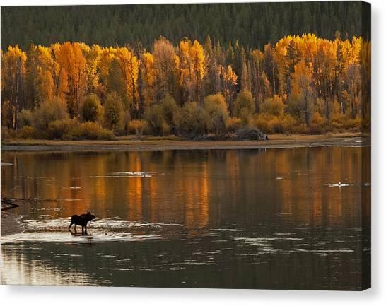 Autumn Fire Canvas Print by Sandy Sisti
