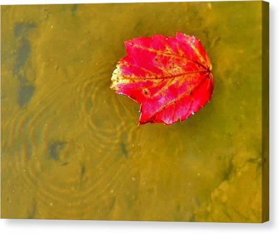 Autumn Floats Canvas Print