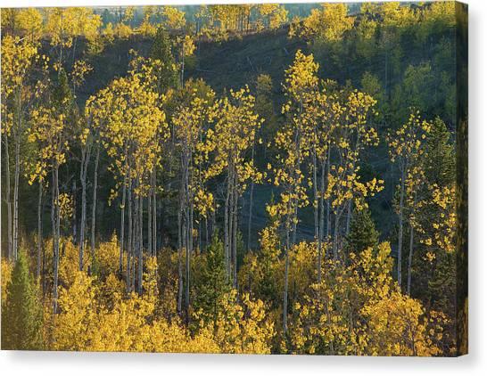 Teton National Forest Canvas Print - Autumn Foliage In Bridger Teton by Charlie James