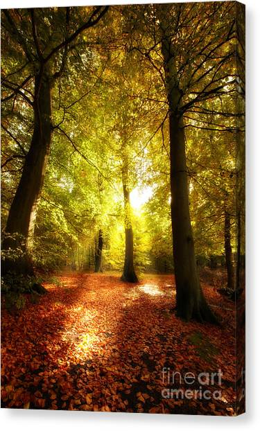 Autumn Forest Canvas Print by Boon Mee