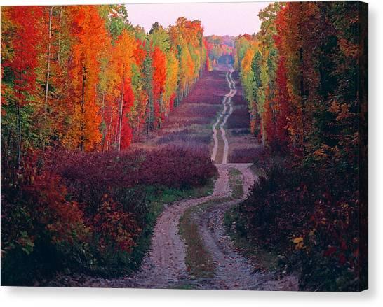 Autumn Forest Road Canvas Print