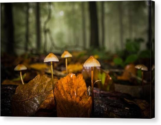 Toadstools Canvas Print - Autumn Fungus by Ian Hufton