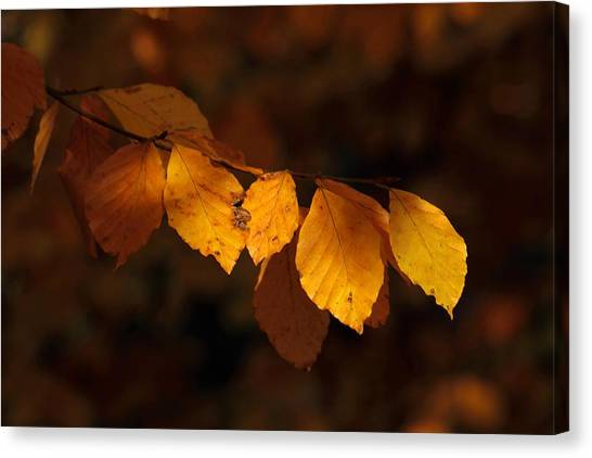 Autumn Gold Canvas Print by Peter Skelton