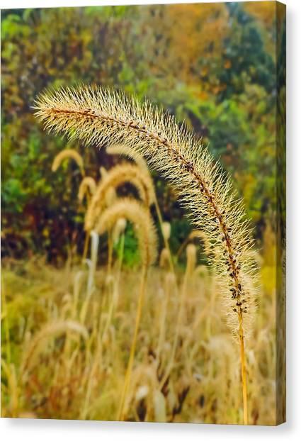 Autumn Grass Canvas Print