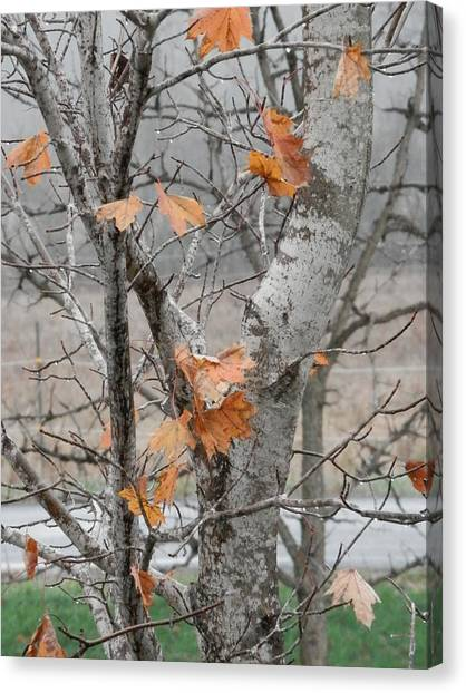 Autumn Grey Canvas Print by Margaret McDermott