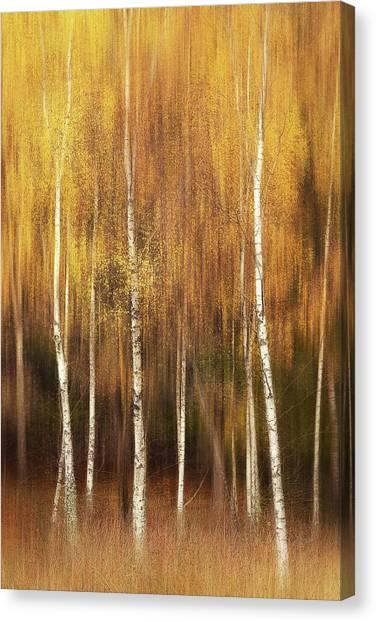 Tree Trunks Canvas Print - Autumn by Gustav Davidsson
