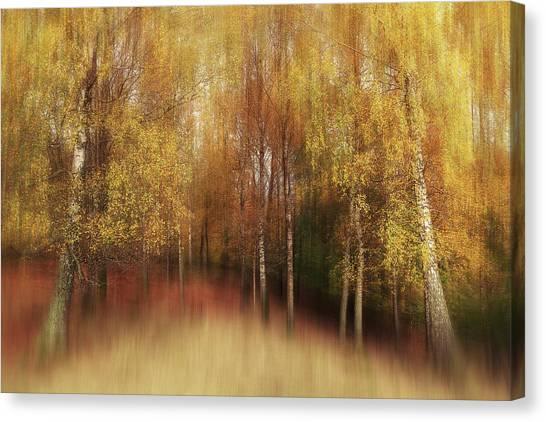 Birch Canvas Print - Autumn Impression by Gustav Davidsson