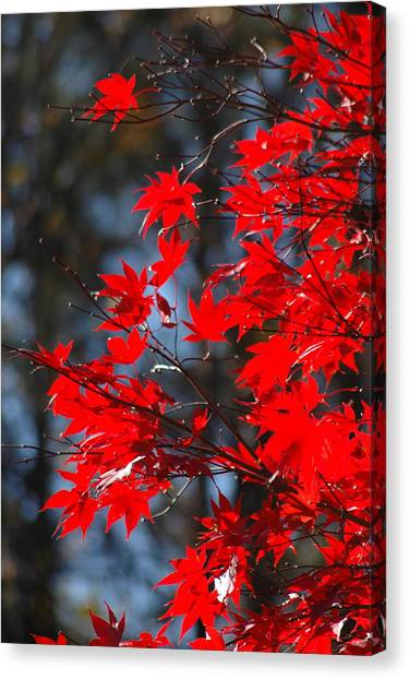 Autumn In Red Canvas Print by Les Scarborough
