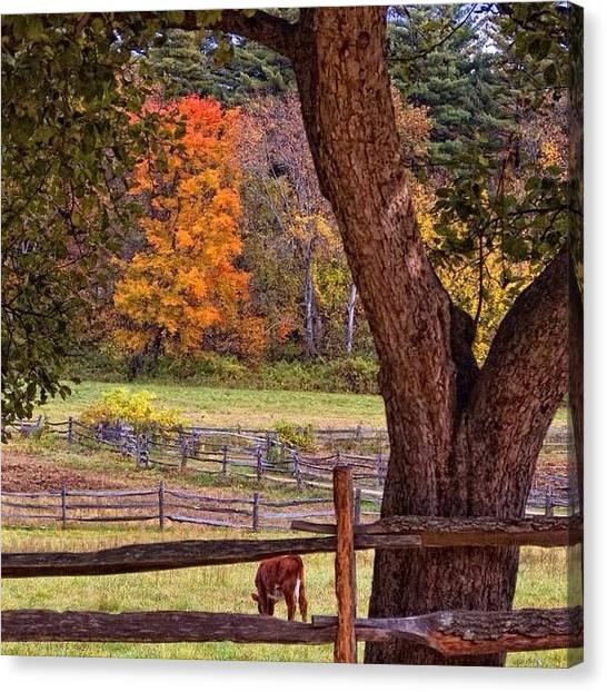 Massachusetts Canvas Print - Autumn In Sturbridge Mass. #igmasters by Joann Vitali