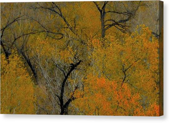 Autumn Intrigue Canvas Print