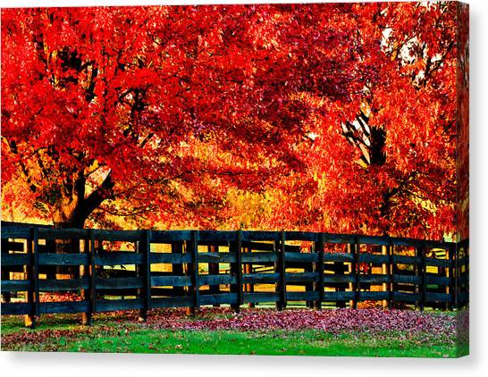 Autumn Kentucky Maples Canvas Print