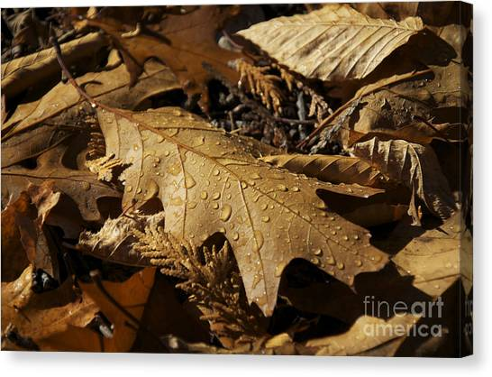Autumn Leaf At Dawn Canvas Print