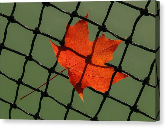 Autumn Leaf In Net Canvas Print