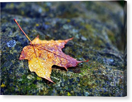 Autumn Leaf On Rocky Ledge Canvas Print