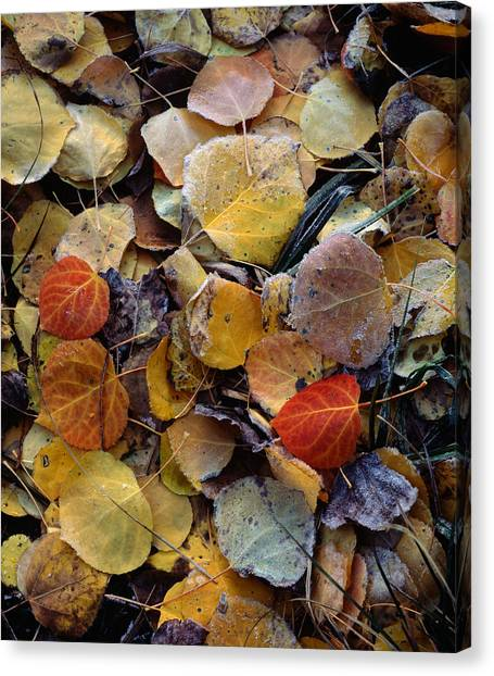 Autumn Leaf Puzzle Canvas Print