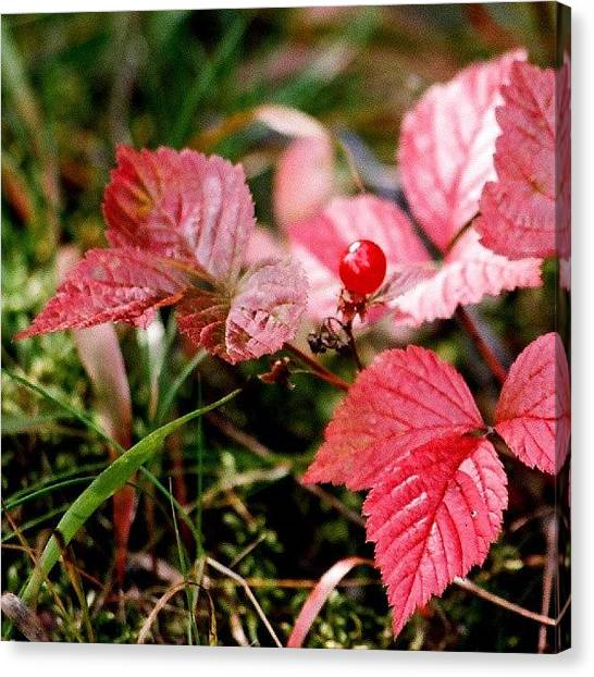 Metallic Canvas Print - Autumn Leaves And Berry by Tony Webb