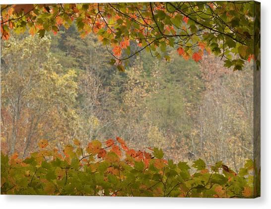 Big South Canvas Print - Autumn Leaves by Byron Jorjorian