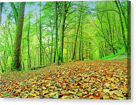 Autumn Leaves Canvas Print by Frank Anthony Lynott