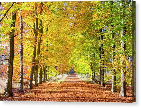 Limburg Canvas Print - Autumn Leaves In Hoge Kempen National by Jason Langley