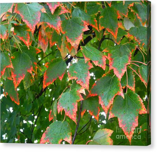 Autumn Leaves Canvas Print by Marcia Nichols