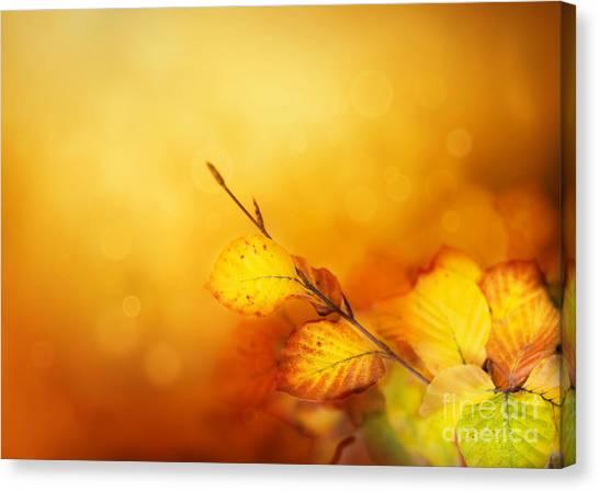 Mythja Canvas Print - Autumn Leaves by Mythja  Photography