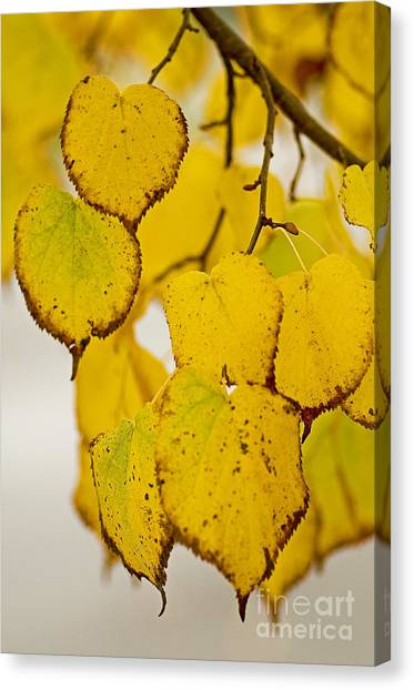 Autumn Leaves Canvas Print by Nick  Boren